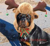 rottweiler with antlers on