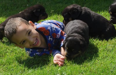 our rottweiler puppies playing with our grandson